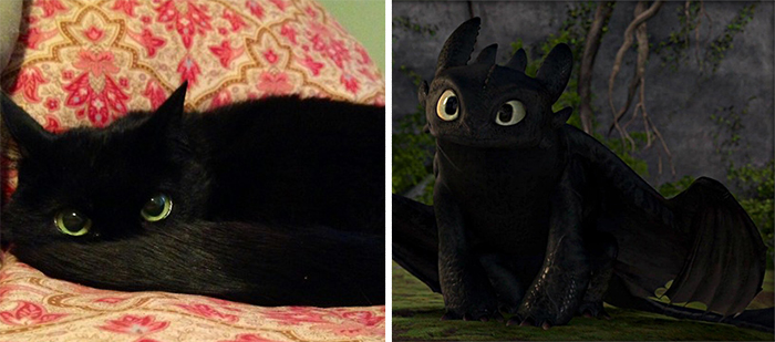 This Cat Looks Like Toothless