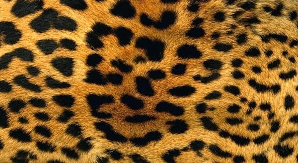 Cheetah Skin Wallpapers for Samsung Galaxy Note 3