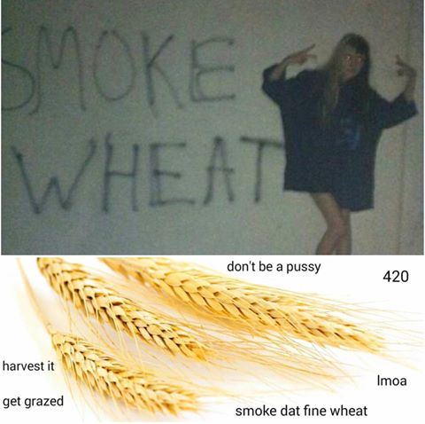 Smoke Wheat