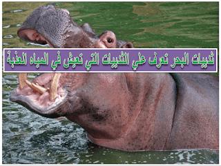ثدييات البحر تعرف علي الثدييات التي تعيش في المياه العذبة