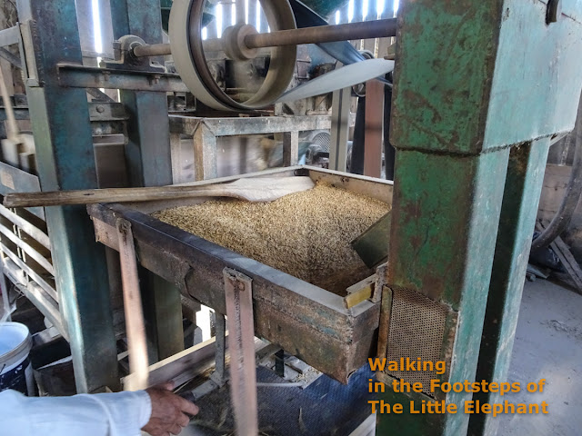 Producing rice in Thailand