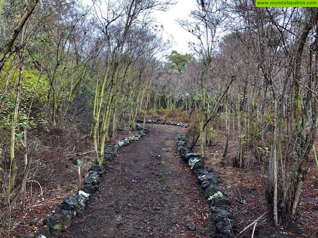 Breña Baja recupera para el paseo el Parque Natural de Finca Amado