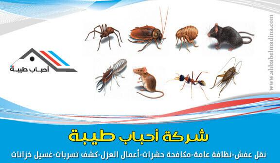 شركة رش حشرات بينبع