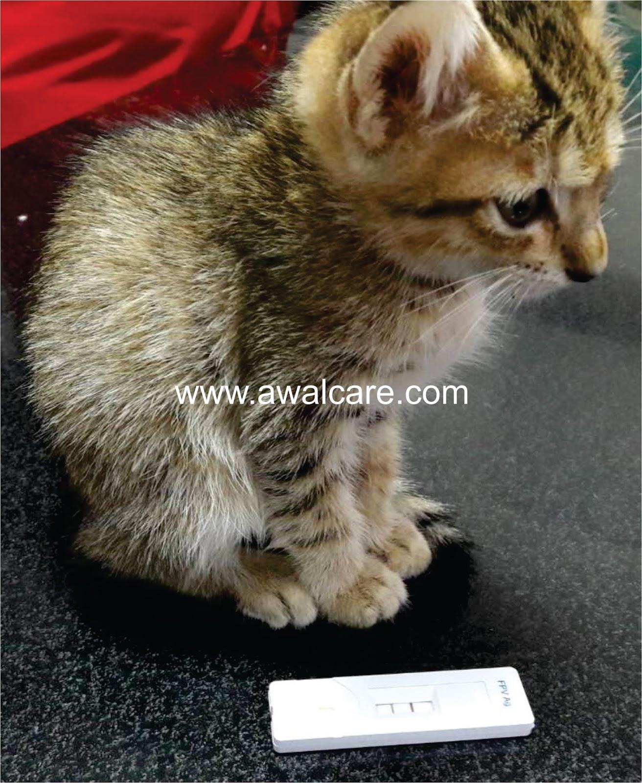 KLINIK HEWAN BEKASI & JAKARTA: Feline Panleukopenia Virus (FPV)