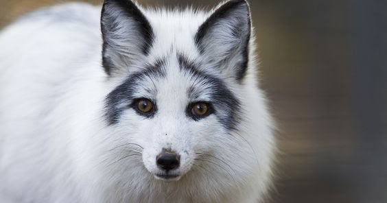 Fun Factual Weird And Breathtaking The Exotic Arctic