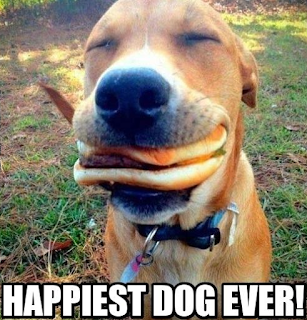Happiest dog ever with cheese burger in mouth