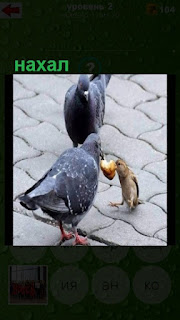 нахал воробей отнимает еду у голубей на улице