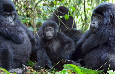RWANDA GORILLA TREKKING SAFARI TERMS AND CONDITIONS: