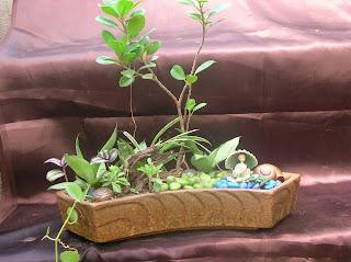 Landscape pot plants ahmedabad