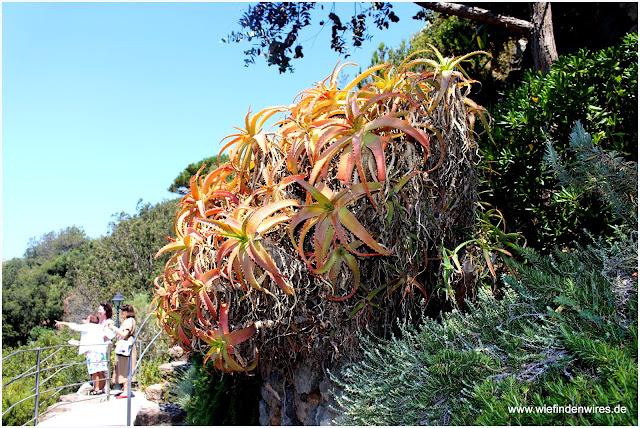 botanischer Garten Forio