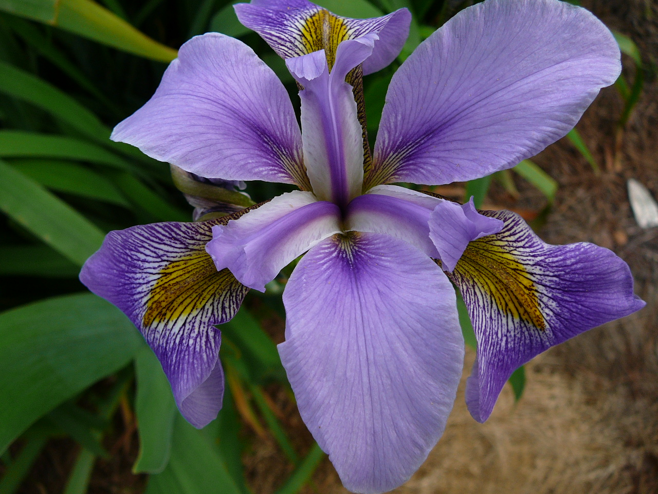 World of Irises October 2013