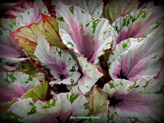 folhas coloridas