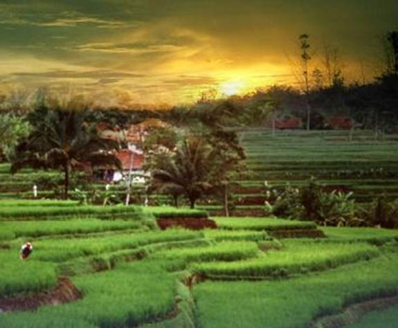 gambar pemandangan sawah | Indonesiadalamtulisan