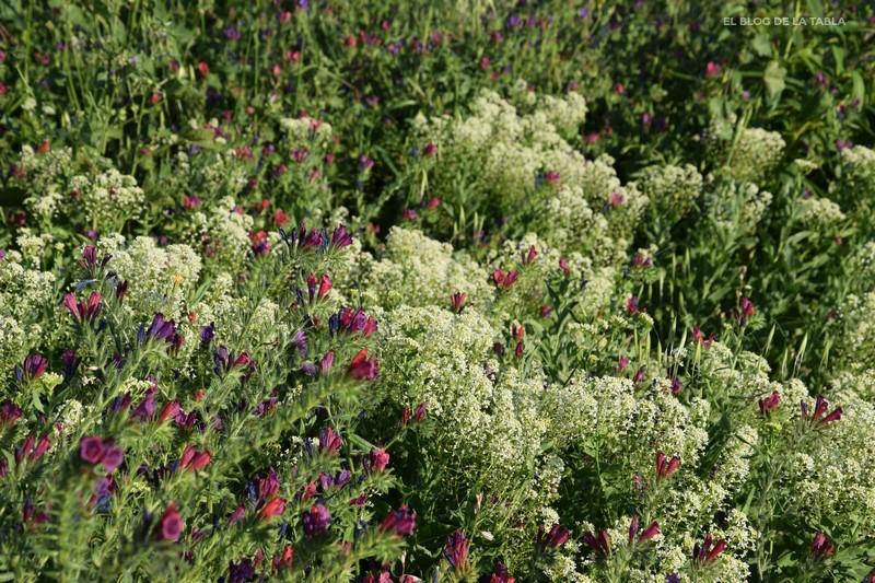 combinación plantas mediterráneas