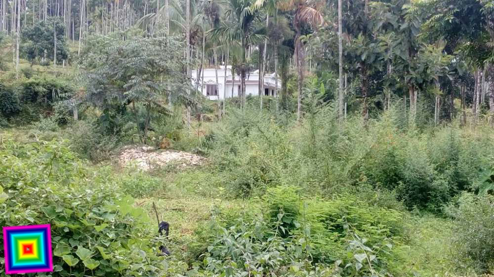 3 5 Acres plot for sale in Ambalavayal Ph : 919562720812 | REAL ESTATE