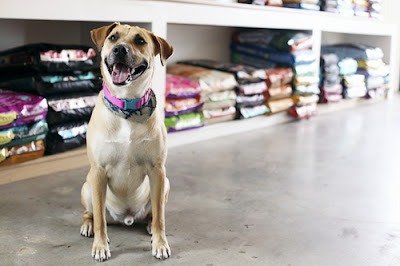 A Guide to Choosing the Best Flooring For Pet Shop