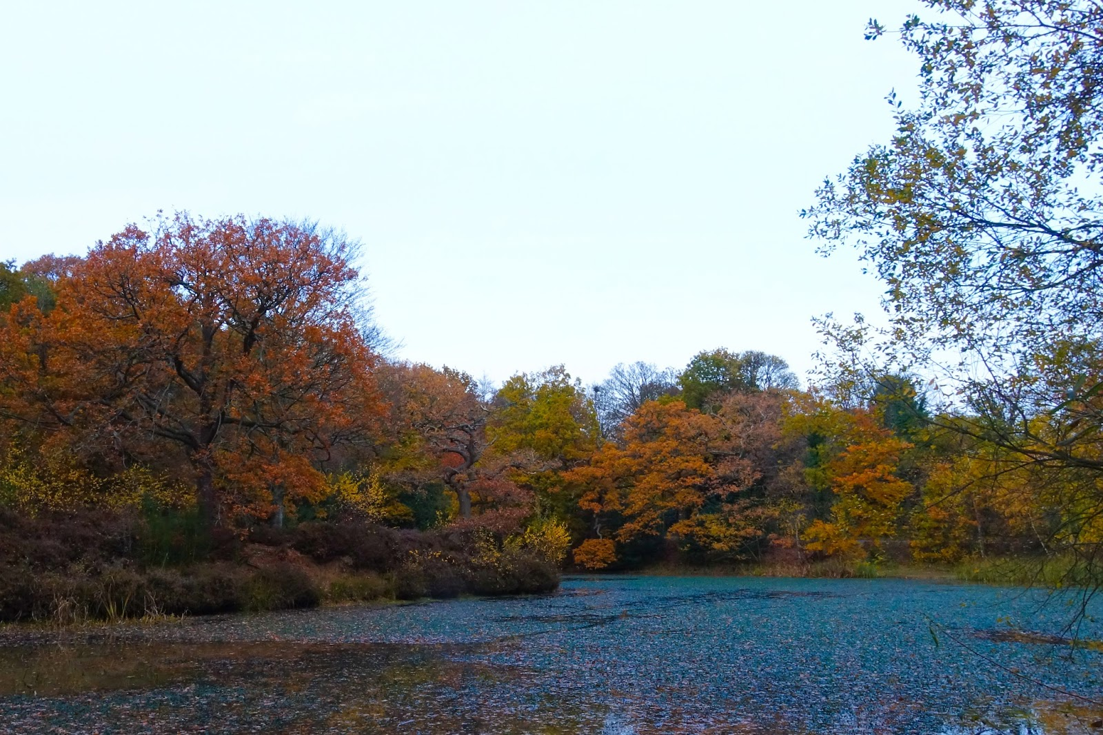 A lake in the foreground and autumnal trees behind it