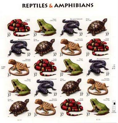 Zoología: Subphyllum Vertebrados - Anfibios y Reptiles 10 Examples Of Reptiles