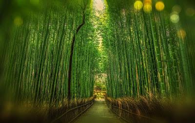 Canne di bambù bamboo I cowboy non lo dicono Kai e Rand vacanza amore coming out Tara Lain