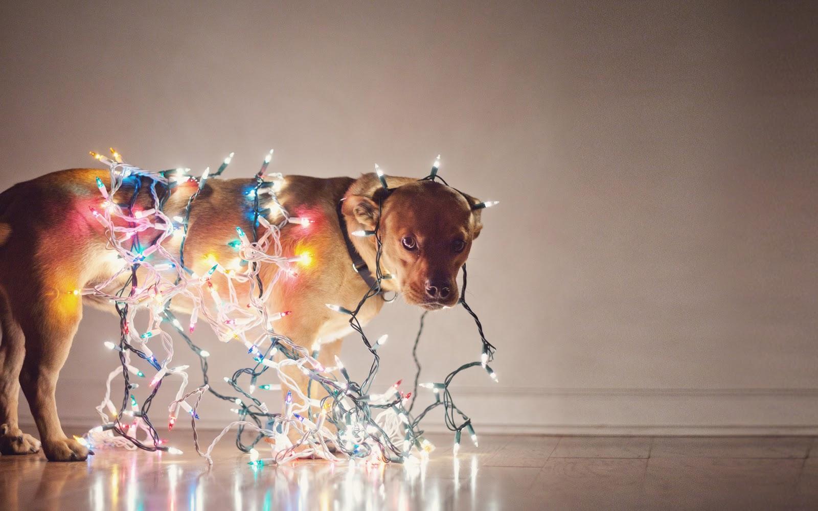 Tumblr Fondos De Pantalla De Navidad: Imagenes Y Wallpapers: Fondo De Pantalla Animales Perro