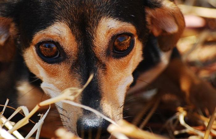 cão pedindo carinho