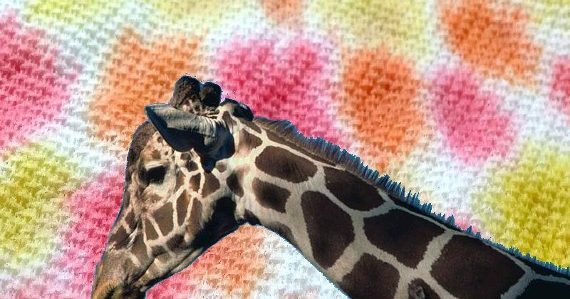 Crazy Cool Giraffe Science Experiment Preschool Powol