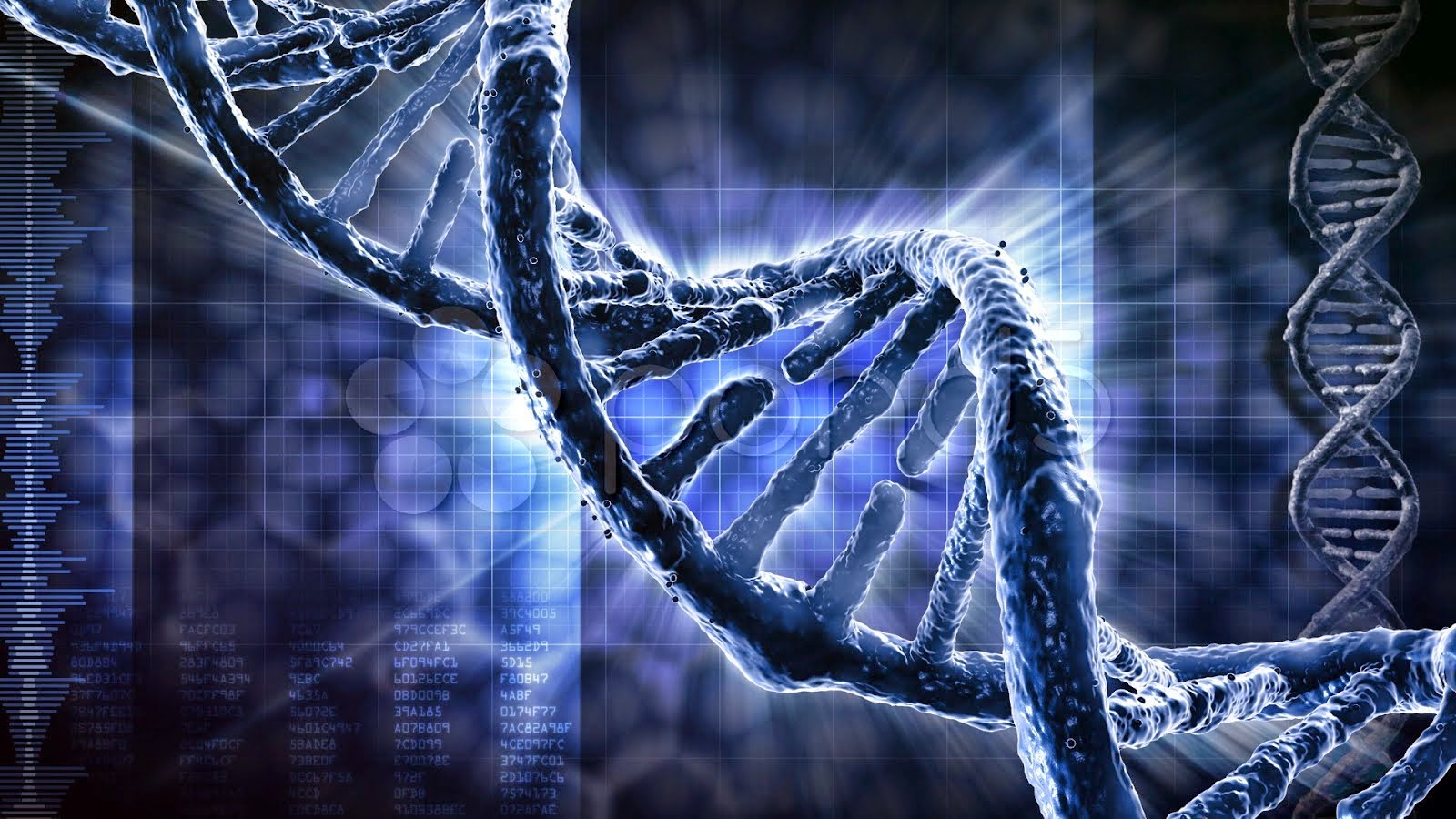 Genetica leyes de mendel yahoo dating 9