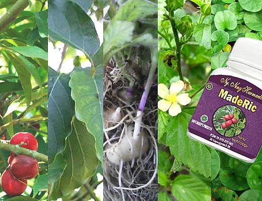 MadeRic Obat Herbal untuk Asam Urat