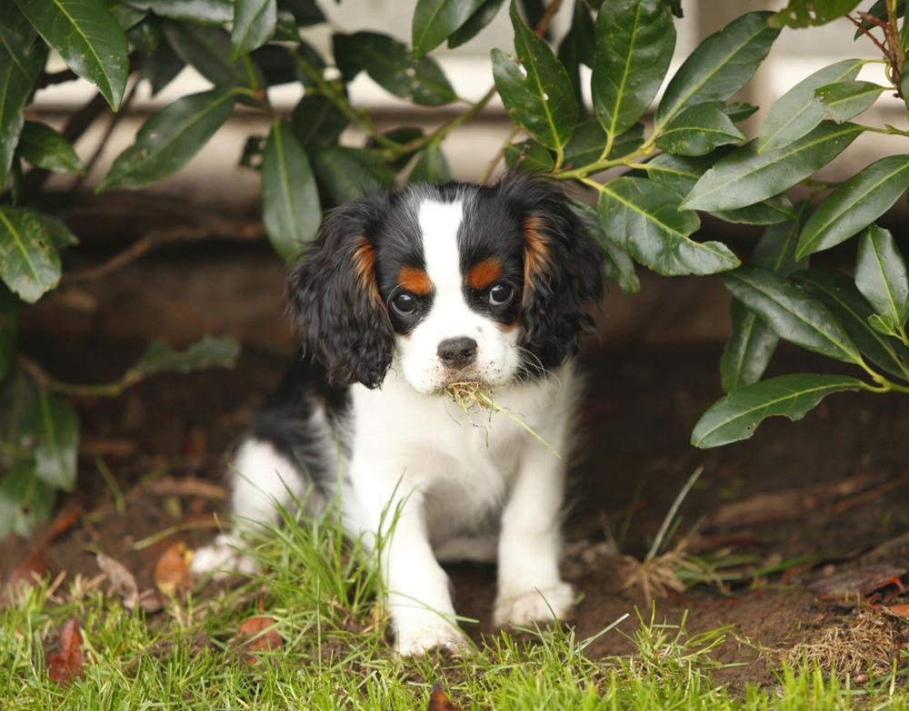 Dog Proof Plants Australia