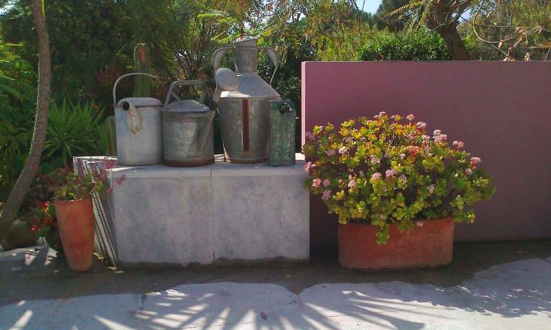 El jard n de suculentas de margaret jackson en el algarve - Jardin sin mantenimiento ...