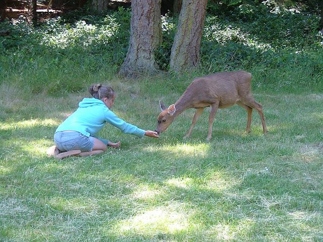 tame deer on Jones Island #2