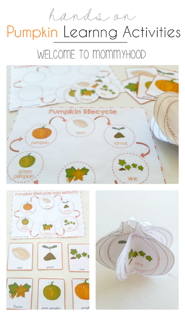 Pumpkin themed activities: pumpkin life cycle printables by Welcome to Mommyhood #preschoolactivities, #halloweenactivities, #thanksgivingactivities, #pumpkinactivities, #homeschool, #montessori