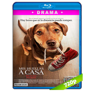 Mis huellas a casa (2019) BRRip 720p Audio Dual Latino-Ingles