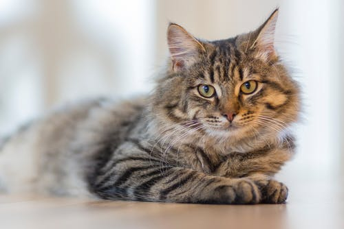Diabetes in cats: symptoms, causes, treatments and prevention