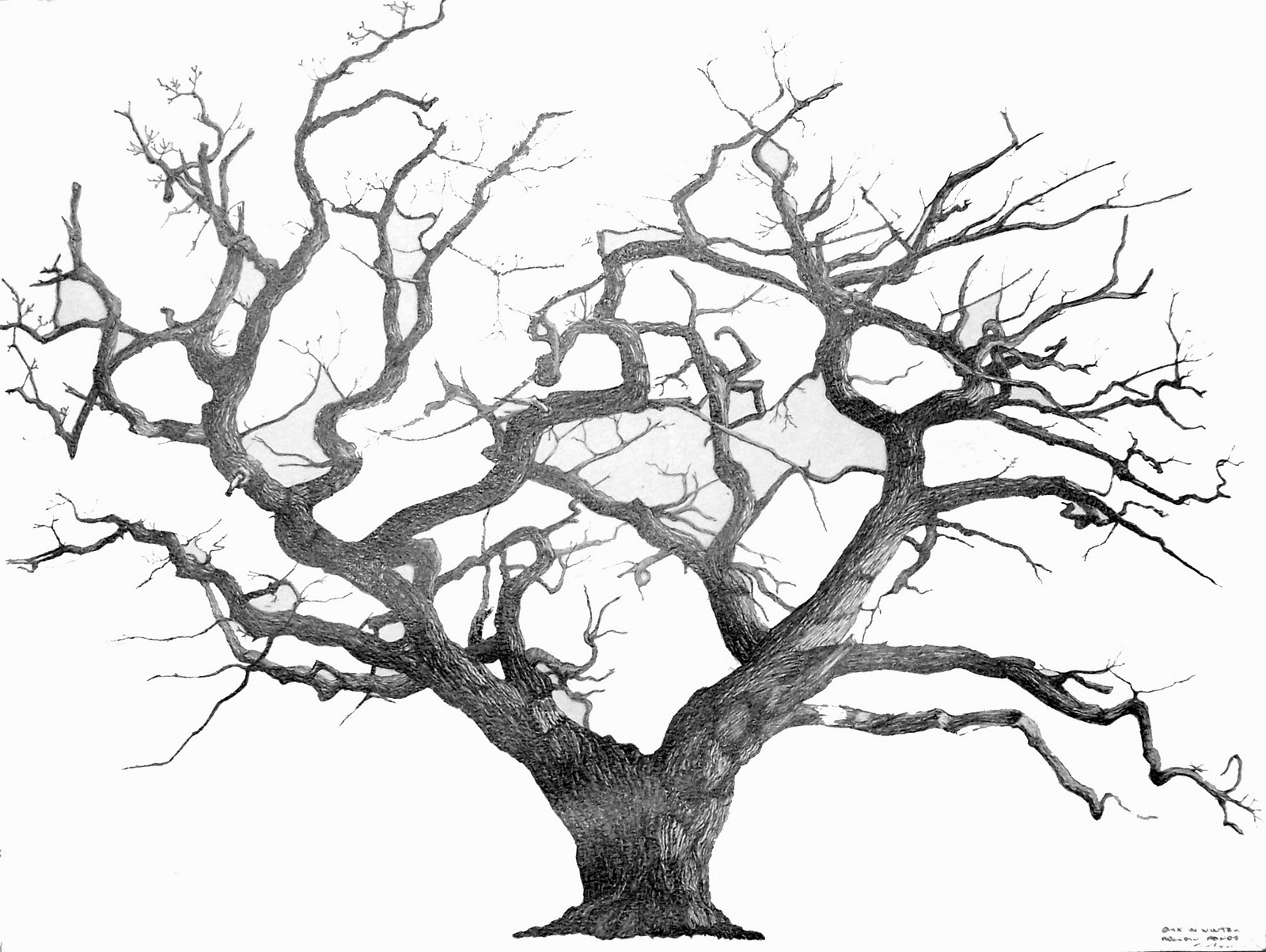 small resolution of art works tree drawings enchanted tree clip art transparent enchanted tree clip art 1080p