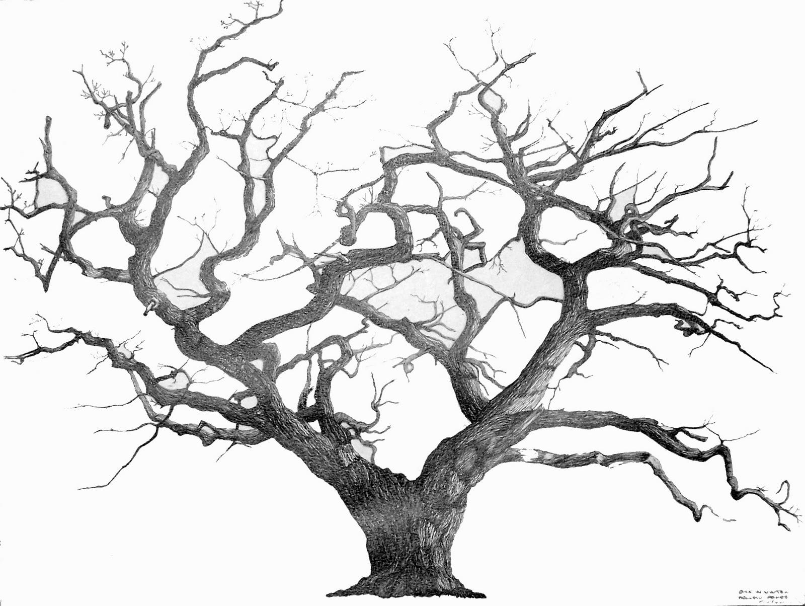 art works tree drawings enchanted tree clip art transparent enchanted tree clip art 1080p [ 1600 x 1204 Pixel ]