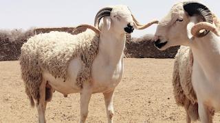 Eid al-Adha اجمل صور خلفيات وكروت تهنئة بمناسبة عيد الاضحى المبارك Eid al-Adha