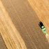Opinion: GE Crops Are Seen Through a Warped Lens