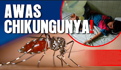 Image result for demam chikungunya