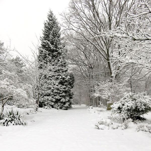 Winter, schneebedeckte Tanne, verschneite Wege