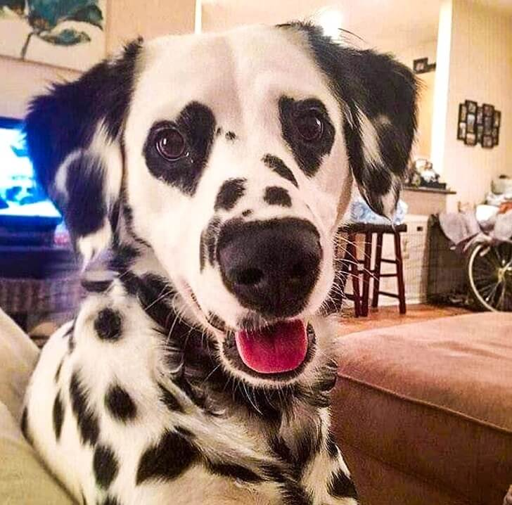 21 Cute Pictures Of Animals That Can Make Even The Worst Day A Bit Better - One can see the love in her eyes.