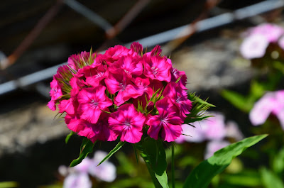 Blumen, flores, Flower, fleurs, květiny, Flores, blomme, blommor, çiçekler, kwiaty, Flor, Hoa, nở hoa, floración, bloom, Kukka, kukinta, La floraison, Fiore, Cvjetni, cvatu, Цвет,   Bloem, bloei, Цветок, цветение, Kvetina, kvet, Çiçek, Virág, virágzás, lule, ծաղիկներ, gül, loreak, cvijeće, blomster, floroj, lilled, kukkia, fleurs, flores, , bunga-bunga, bláthanna, blóm, fiori, kembang, гүлдер, flors, гүлдөр, fiori