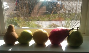 Paleo-Blueberry-Pear