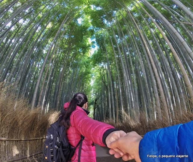 floresta de bamboo de Arashiyama