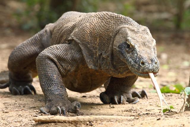 Habitat Komodo
