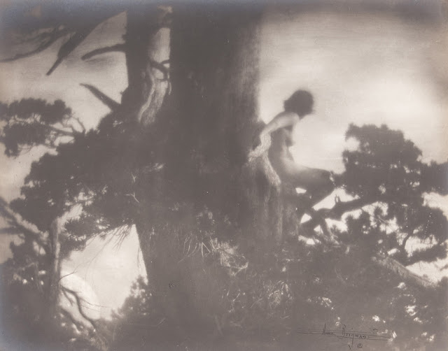 """The Pine Sprite"" by Anne Brigman, 1907. Courtesy of MoPA"