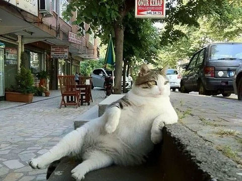 猫のように自由に生きる方法?!猫から学ぶ罪悪感を持たないメンタリティ【th】