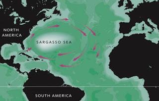 Το αίνιγμα της Θάλασσας των Σαργασσών