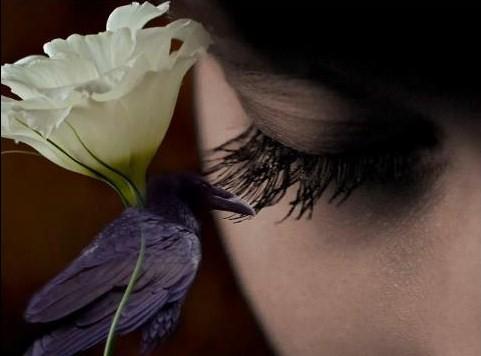 Lágrimas de uma flor que chora a saudade que si foi