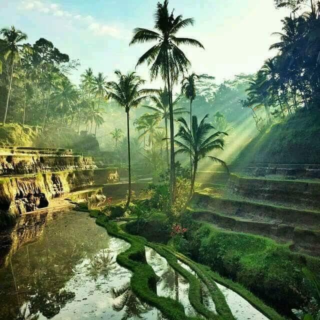 Pemandangan Alam Indah Pematang Sawah di Desa Bagai Lukisan